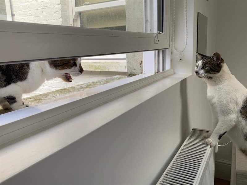 animals Story: mad cat crazy cat funny animals jerks reddit animals being jerks funny photos funny photos of the day cool photos cats knocking things over cats knocking things over