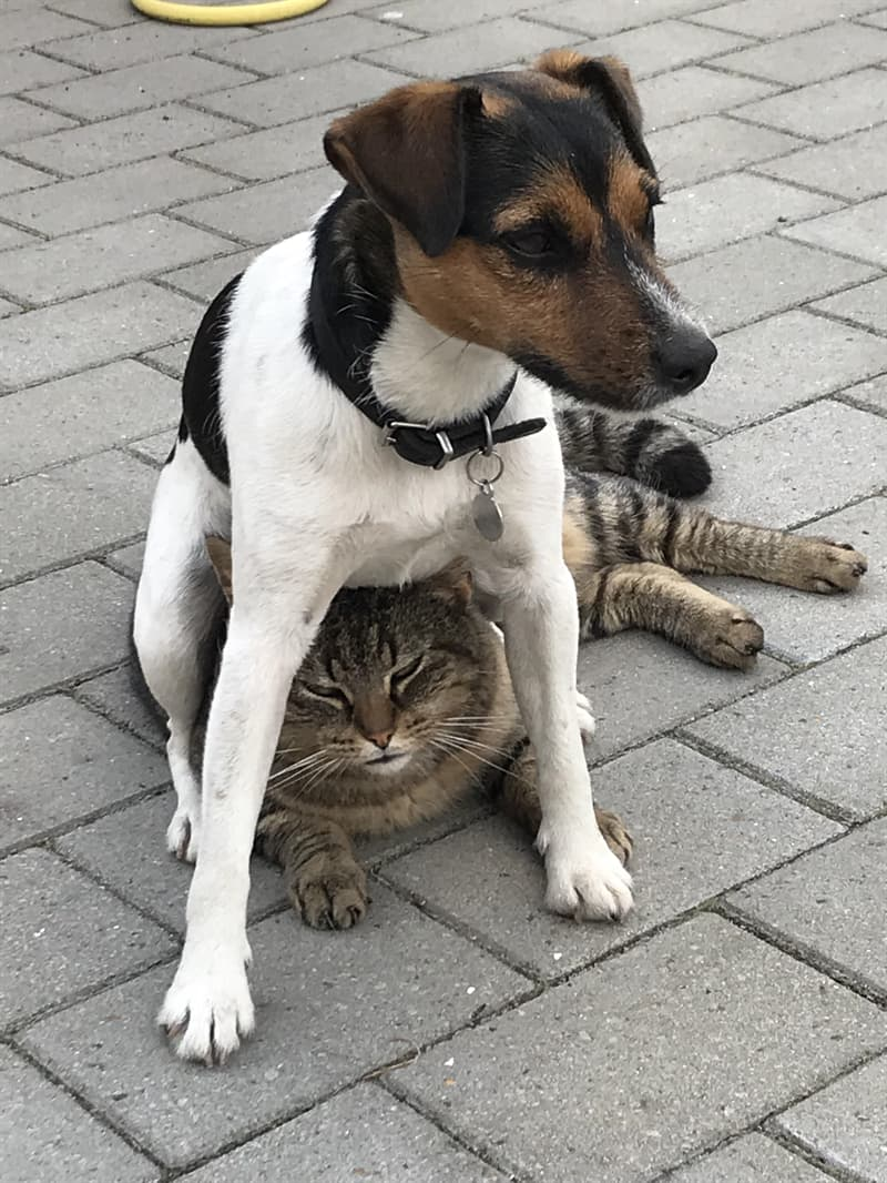 animals Story: dogs sit on a cat animals jerks reddit animals being jerks funny photos funny photos of the day cool photos cats knocking things over cats knocking things over