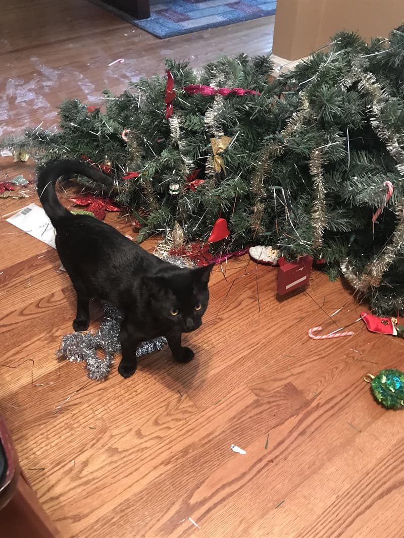 animals Story: cats knocking over christmas trees animals jerks reddit animals being jerks funny photos funny photos of the day cool photos cats knocking things over cats knocking things over