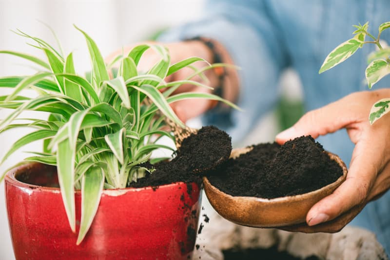 Society Story: coffee lovers life hacks coffee addicts garden plants fertilizing garden