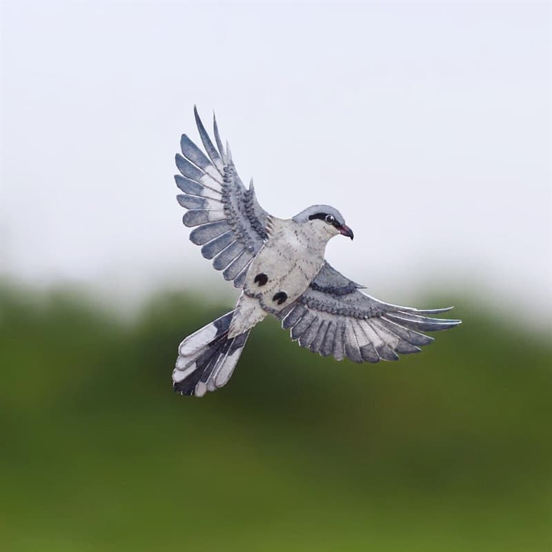 animals Story: Great grey Shrike paper birds what's your hobby paper crafts
