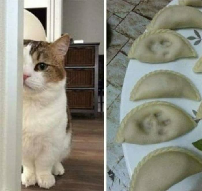 Nature Story: #6 See how this cat decides to 'leave a lasting impression' on their owner's pie.