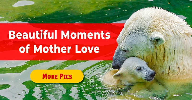 Nature Story: 11 animal photos that explain motherhood in a nutshell
