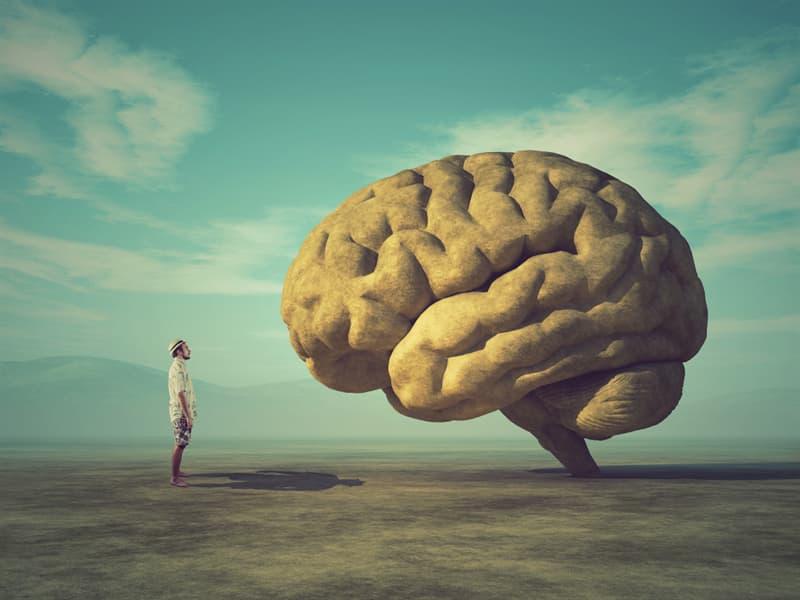 Nature Story: #13 Surprising Human Brain