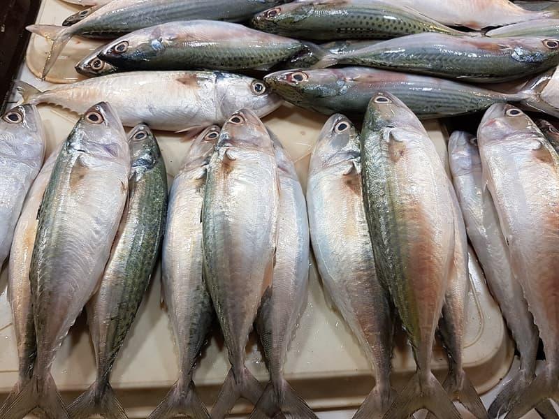 Science Story: #3 Mackerel