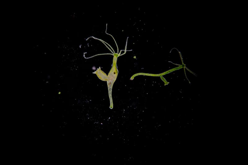 Nature Story: animals without eyes hydra see without eyes blind animals