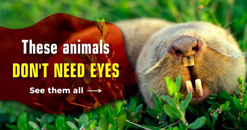 Nature Story: 6 stunning animals without eyes