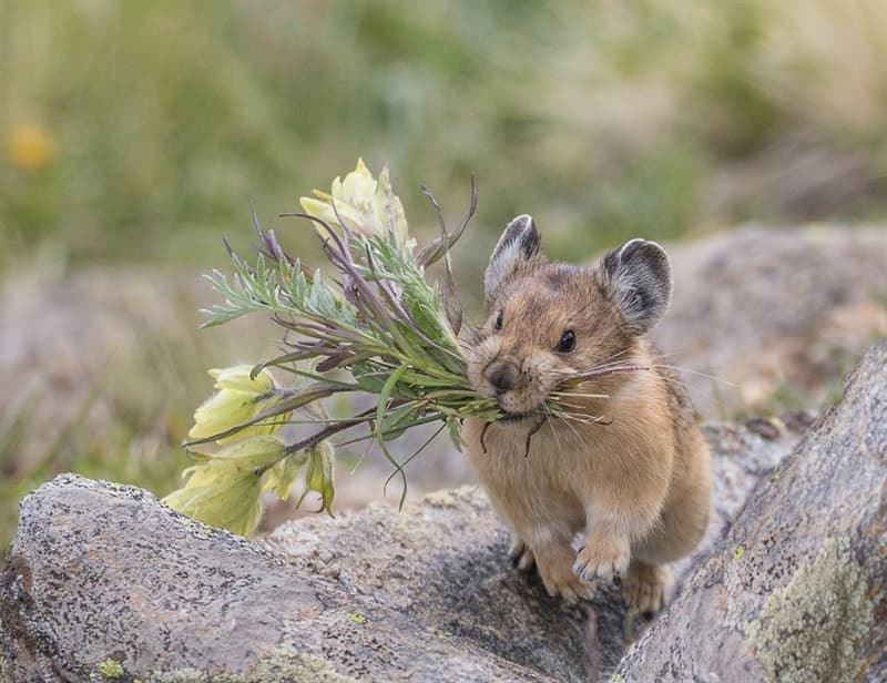 Nature Story: #1 Their closest relatives are rabbits