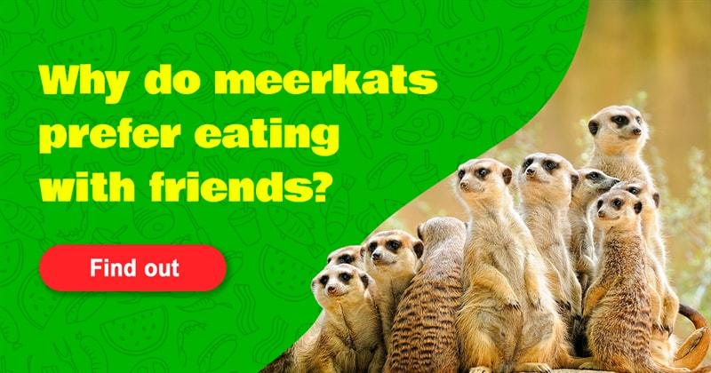 Nature Story: 5 animals that love eating with company – just like we do