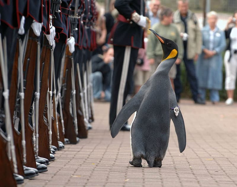 Culture Story: #5 Ever met a knighted Penguin?