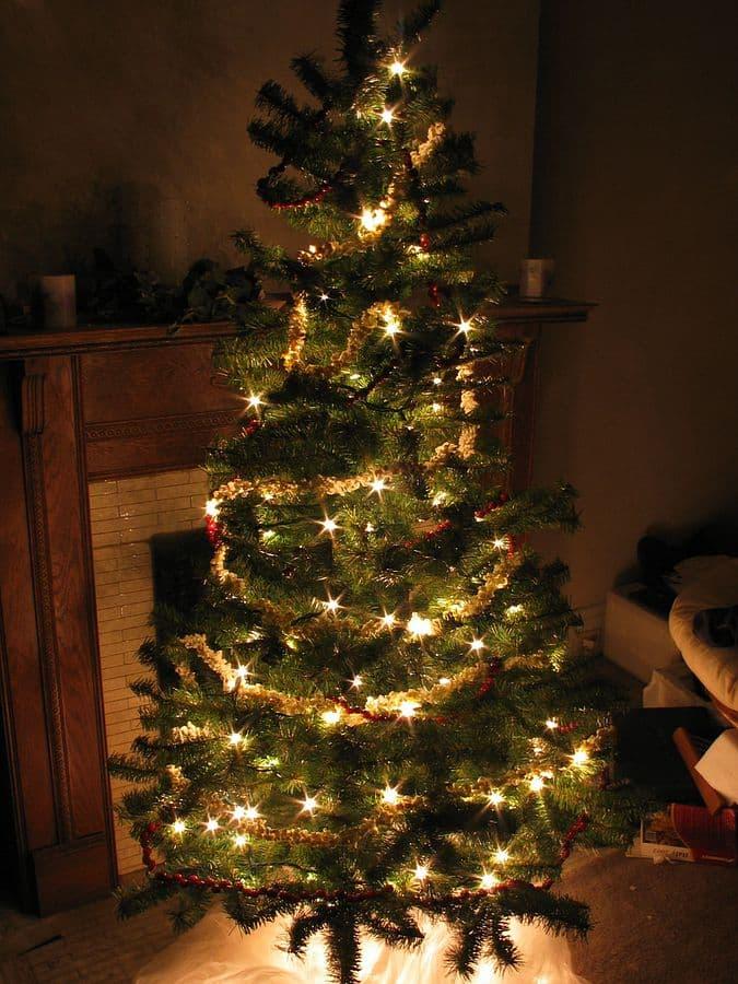 History Story: #3 Christmas Trees