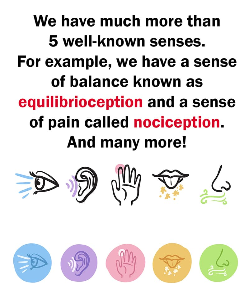 Science Story: We have much more than 5 well-known senses. We also have a sense of balance  known as equilibrioception and a sense of pain called nociception among others.