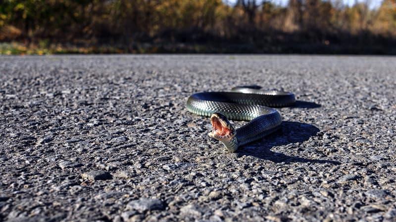 Society Story: #3 Snakes