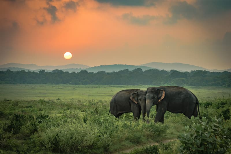 Science Story: #7 Elephants are so emotional they grieve for their dead family members.