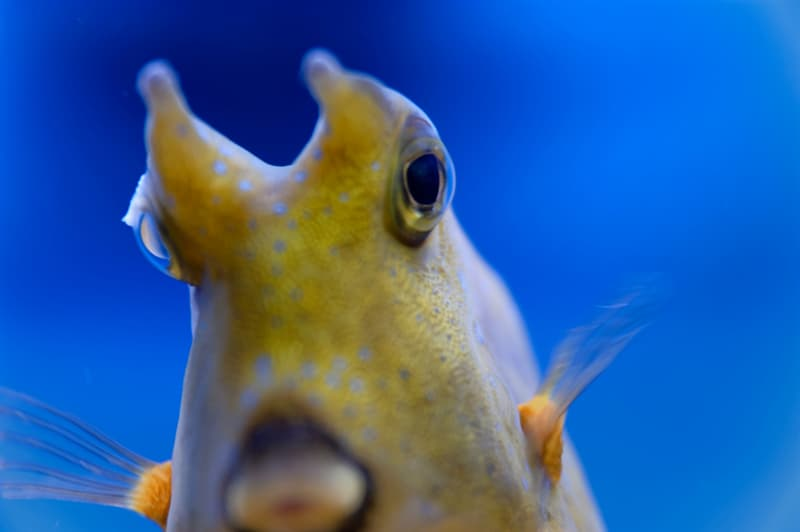 Science Story: #8 Fish also have a trade-by-barter system.