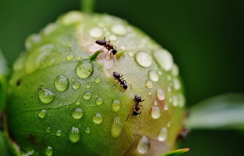 Geography Story: #9 There are around 10 quadrillion ants in the world, and their total weight is around the same as that of the entire human population.