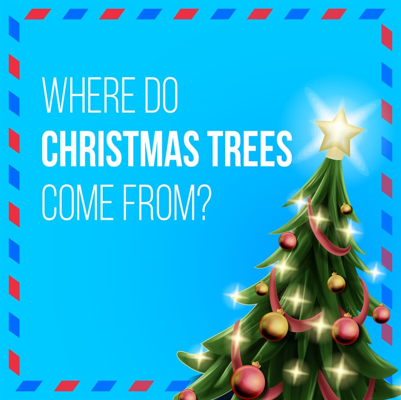 Culture Story: #3 Which country started decorating Christmas trees?