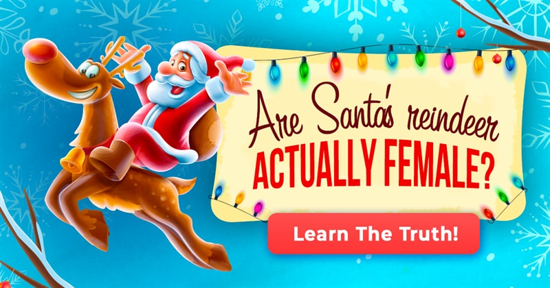 Culture Story: 7 exciting questions that pop up in your head during the holiday season (with answers)