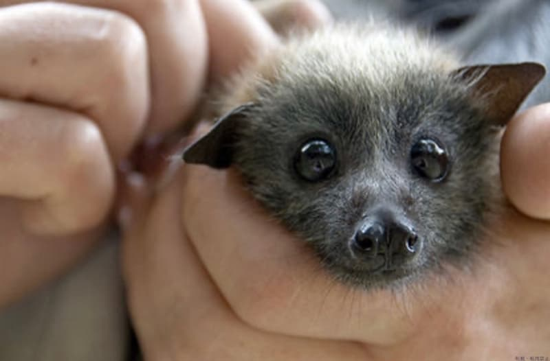 Nature Story: #8 Bat Charming face