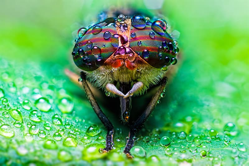 Culture Story: #10 Amazing close up view of a horse fly