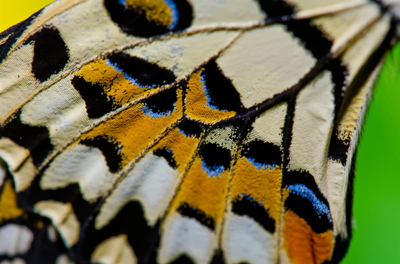 Culture Story: #11 Nature presents us with yet another beautiful butterfly wings pattern