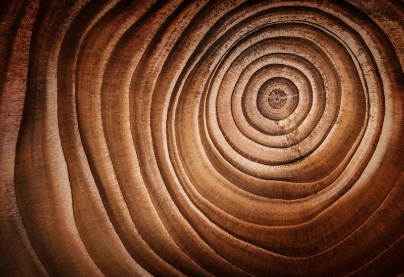 Culture Story: #3 Abstract macro photo of a cut tree trunk and its rings