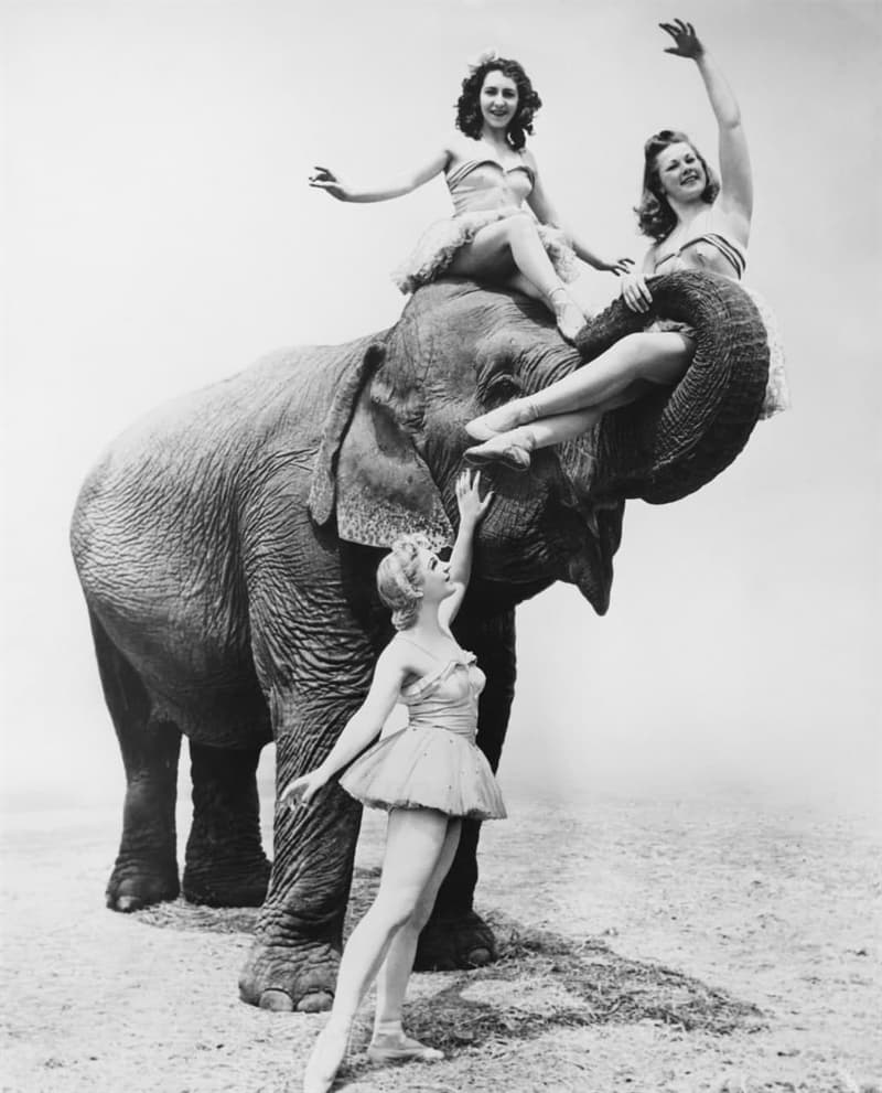 Culture Story: #13 Some brave ladies and their elephant