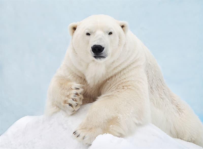 Nature Story: #2 The Polar Bear