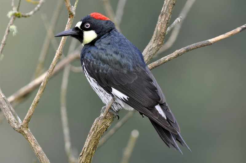 Nature Story: #1 Habitat