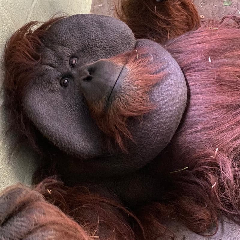 Nature Story: And the animals in the zoo seem completely chilled and happy too!