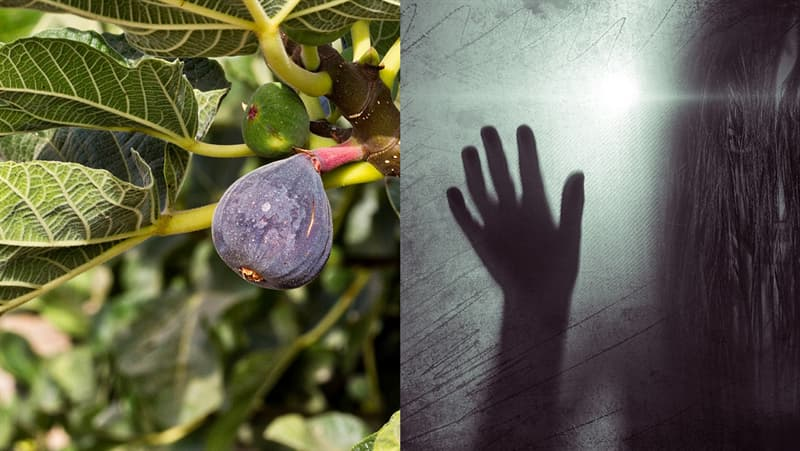 Science Story: #4 Fig trees were believed to contain evil spirits