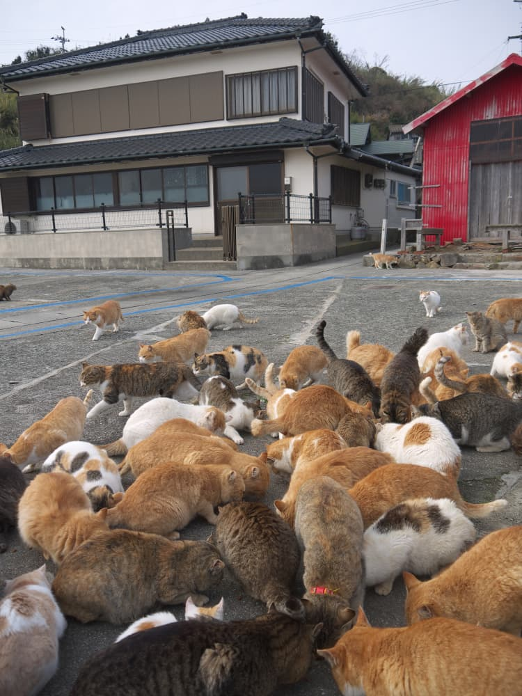 Society Story: #5 Cat Island in Japan