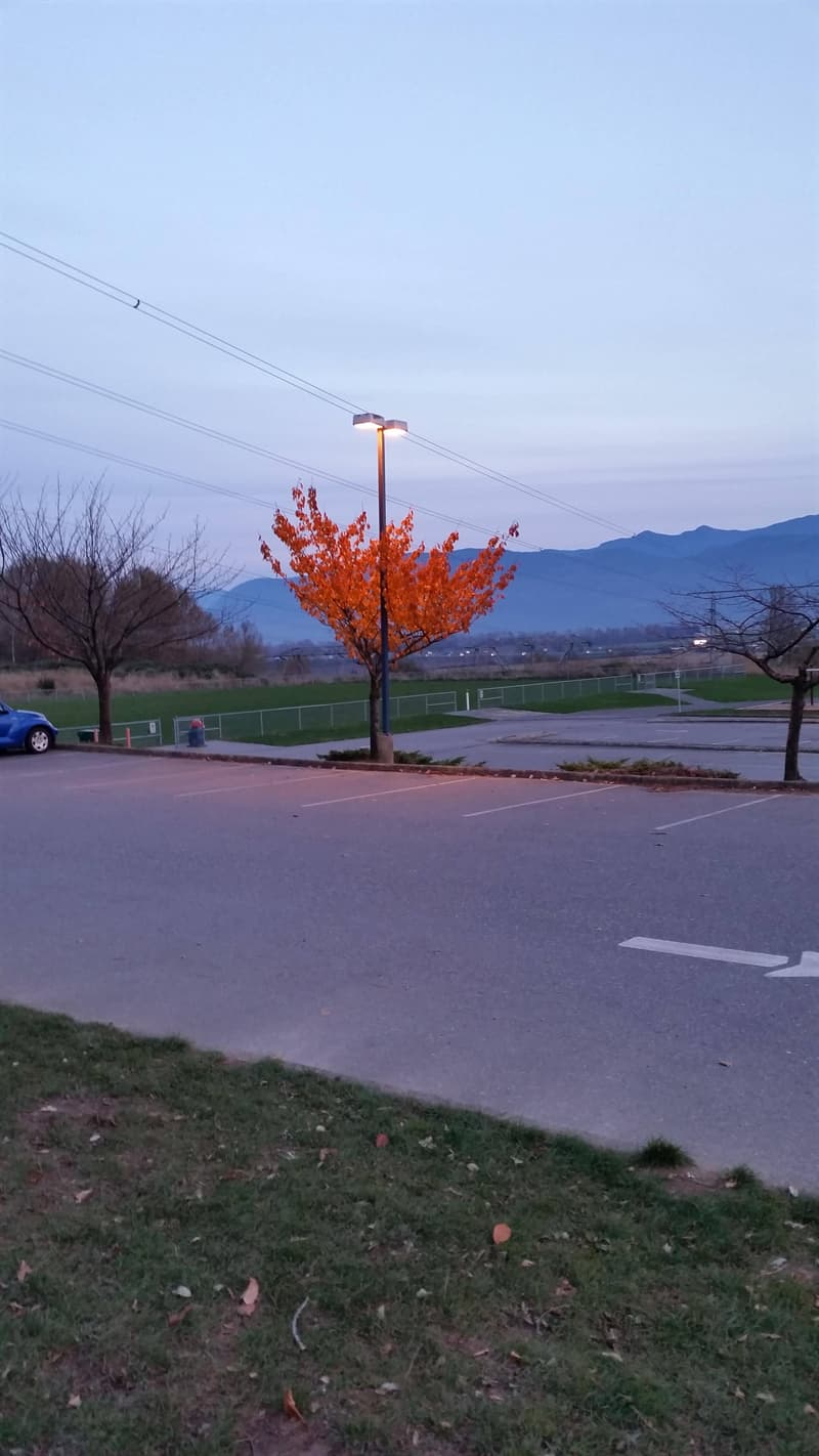 Nature Story: #6 This street lamp makes the tree bloom in season