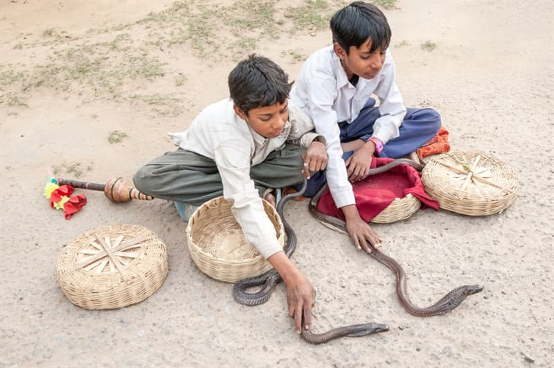 Culture Story: #4 Snake Charming School – master the mysterious ancient art