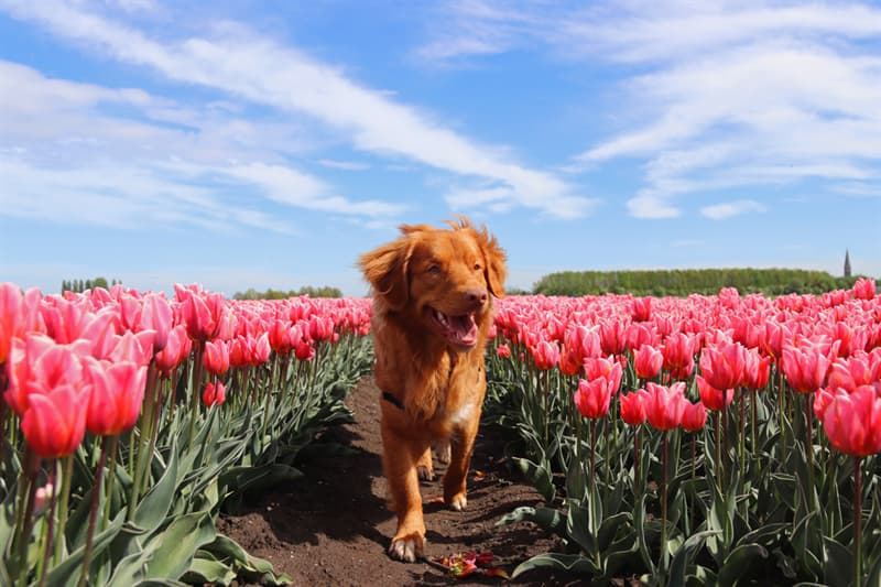 Geography Story: #3 There are no abandoned pets in the Netherlands