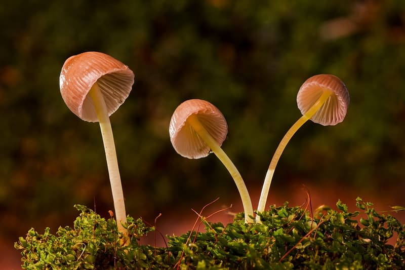 Geography Story: #5 Mushrooms are closer to animals than plants