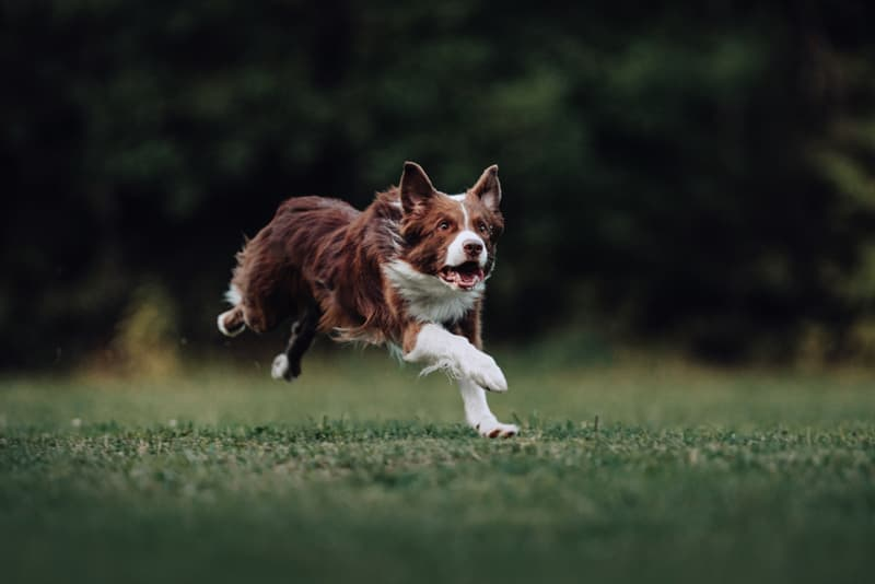 Geography Story: #2 Have you ever seen your dog going around in circles? This strange behavior is actually evolved as a means of protection