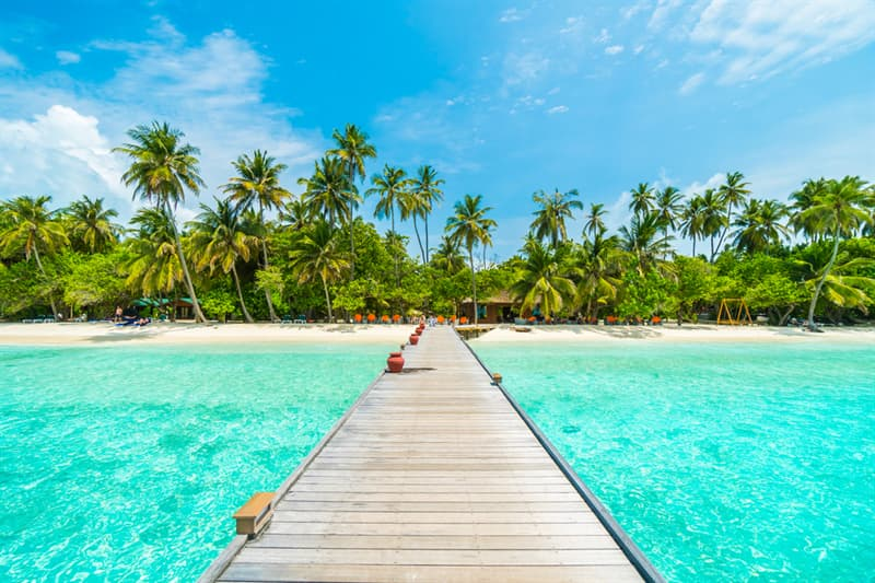 Nature Story: #4 The coconut palm is the national tree of the Maldives