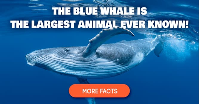 Nature Story: 5 unusual animal facts most people don't know