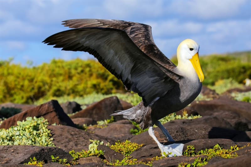 Nature Story: #1 Albatrosses can fly for a very long time without touching land