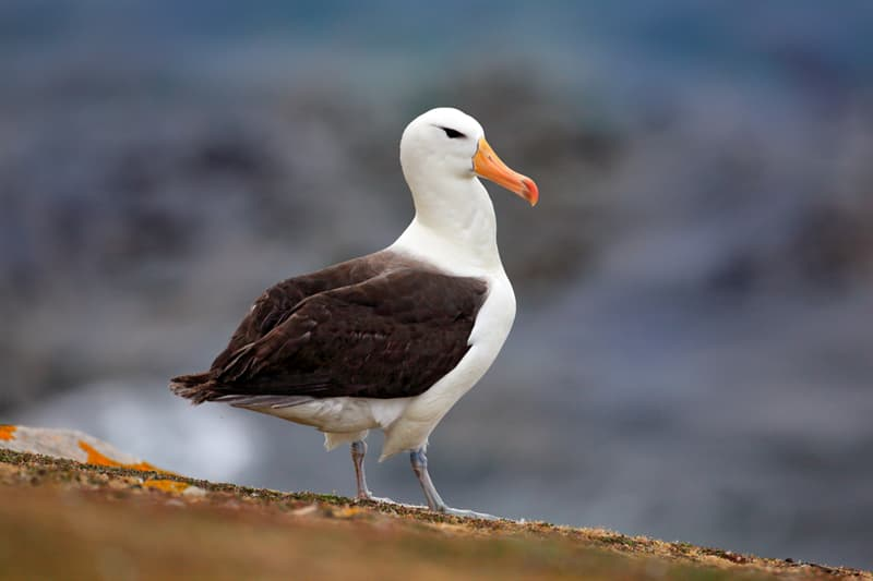 Nature Story: #5 The albatross has the most efficient flying ability amongst birds