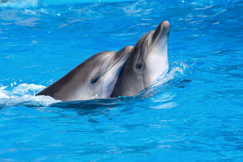 Nature Story: #1 Male dolphins present sponges to female dolphins as a representation of how serious their intentions are