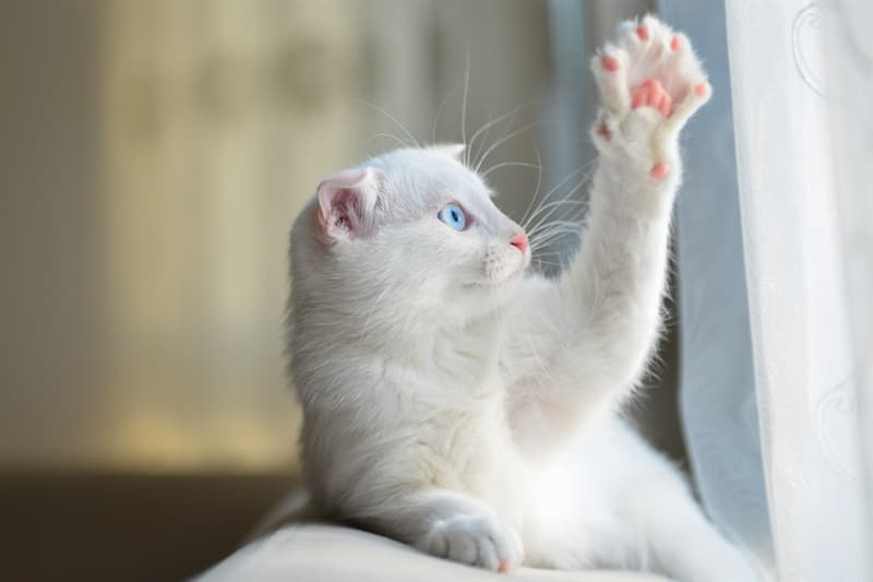 Nature Story: #6 Just as similar to people, cats can also be either right-handed or left-handed