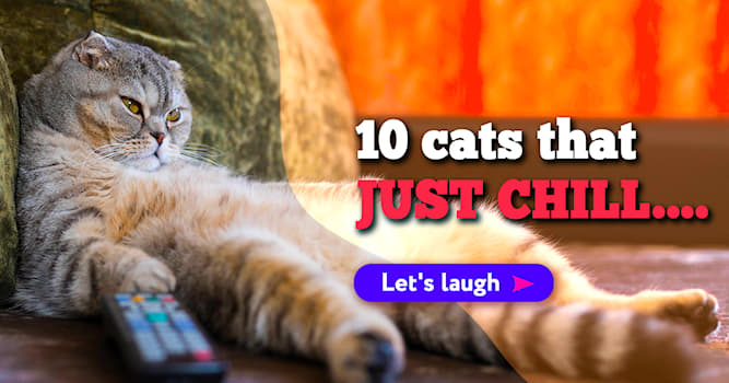 Nature Story: These 10 free-spirited cats in their element will make your day!