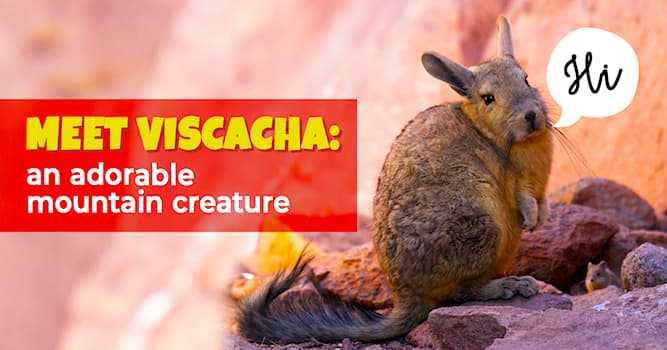Nature Story: 5 amazing facts about the mountain viscacha