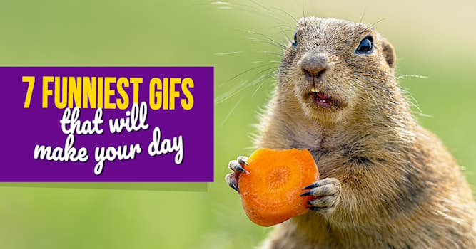 Nature Story: 7 most hilarious and amazing animal GIFs