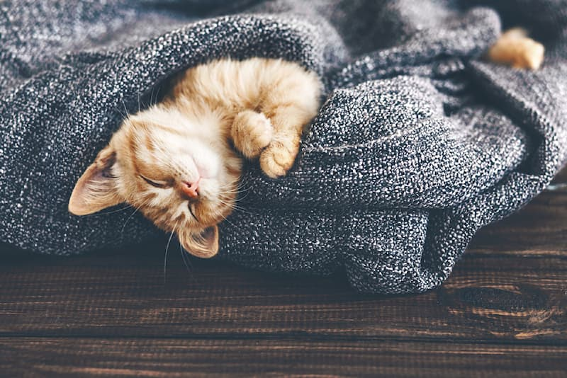 Nature Story: #6 Probably not as shocking as the other animals, the average cat sleeps for about 18 hours daily