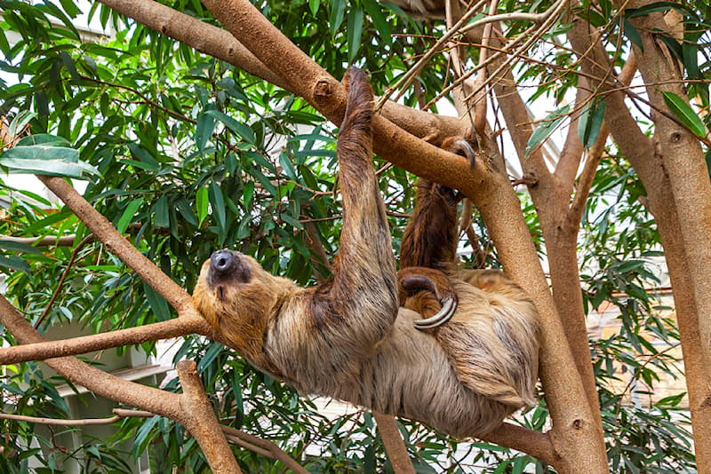 Nature Story: 7 animals that do not joke with their sleep time