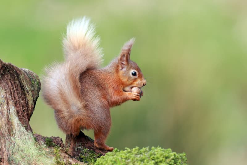 Nature Story: #6 One of our best weapons in reforestation attempts are squirrels.