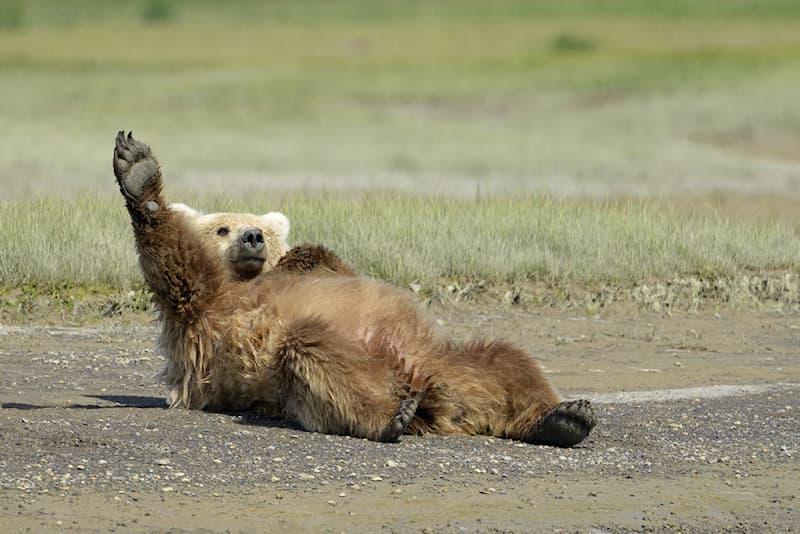 Sport Story: #1 A bear practicing yoga on the beach
